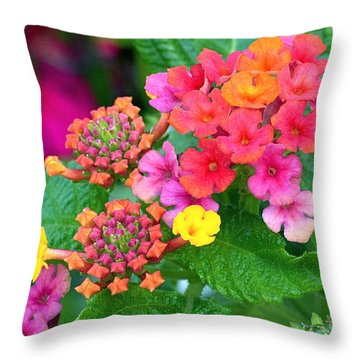 Lantana Throw Pillow by Rona Black