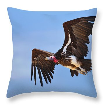 Lappetfaced Vulture Throw Pillow by Johan Swanepoel