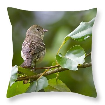 Lazuli Bunting Female 2 Throw Pillow by Sharon Talson