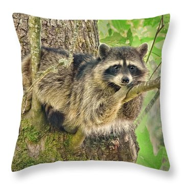Lazy Day Raccoon Throw Pillow by Jennie Marie Schell