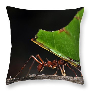 Leafcutter Ant Throw Pillow by Francesco Tomasinelli
