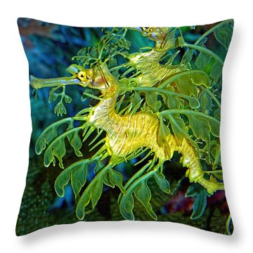 Leafy Sea Dragons Throw Pillow by Donna Proctor