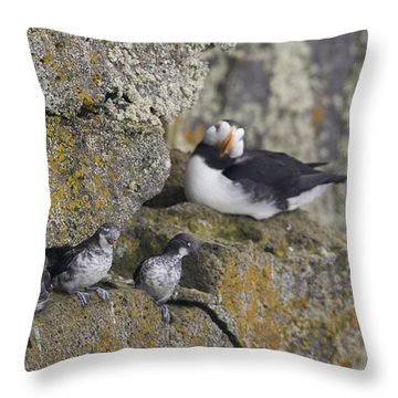 Least Auklets Perched On A Narrow Ledge Throw Pillow by Milo Burcham