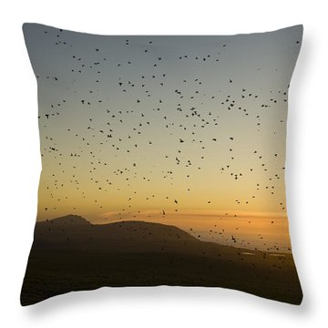 Least Auklets, Returning To Their Nest Throw Pillow by Brian Guzzetti