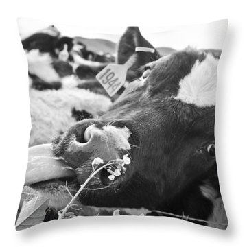 Licking The Picture Frame Throw Pillow by Priya Ghose