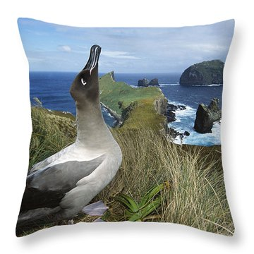 Light-mantled Albatross Sky-pointing Throw Pillow by Tui De Roy