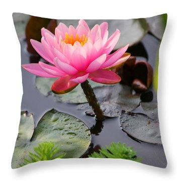 Lily Pink Throw Pillow by Carolyn Stagger Cokley