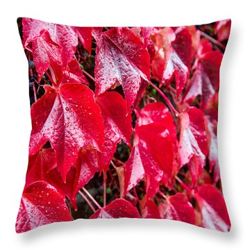 Linne Color Throw Pillow by Chad Dutson