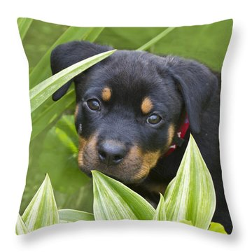 Look For Me Throw Pillow by Heiko Koehrer-Wagner