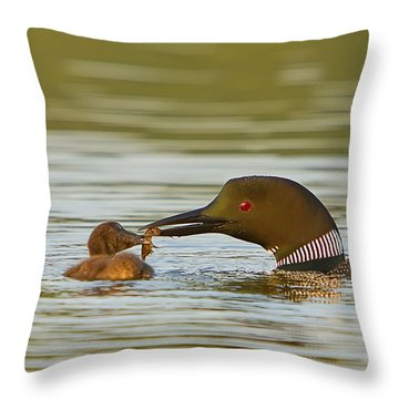 Loon Feeding Chick Throw Pillow by John Vose