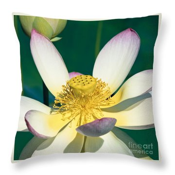 Lotus Blossom Throw Pillow by Heiko Koehrer-Wagner