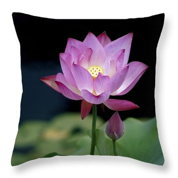 Lotus Blossom Throw Pillow by Penny Lisowski