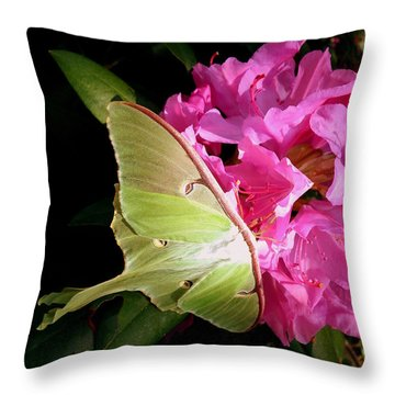 Luna Moth Throw Pillow by Janine Riley