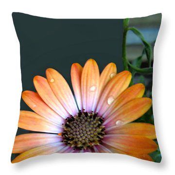 Macro Orange And Yellow Daisies With Water Droplets Throw Pillow by Danielle  Parent