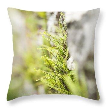 Maiden-hair Spleenwort Throw Pillow by Anne Gilbert