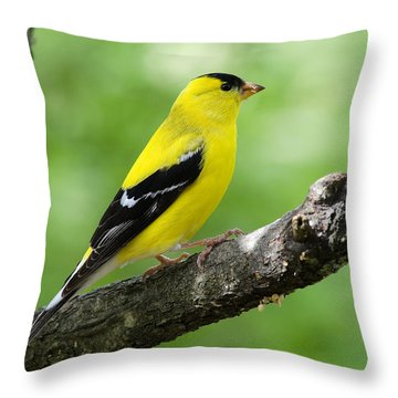 Male American Goldfinch Throw Pillow by Thomas R Fletcher