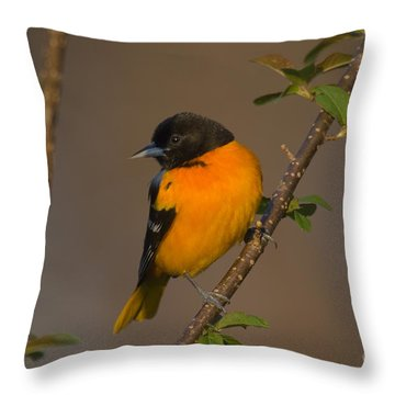 Male Northern Oriole Throw Pillow by Thomas and Pat Leeson