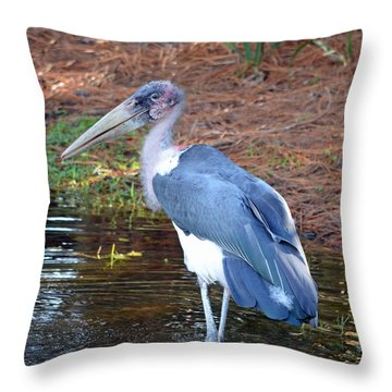 Marabou 2 Throw Pillow by Richard Bryce and Family