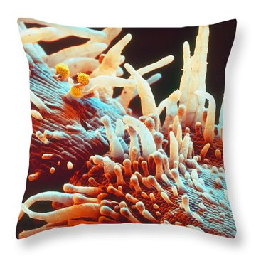 Marigold Petal Sem Throw Pillow by Eye Of Science