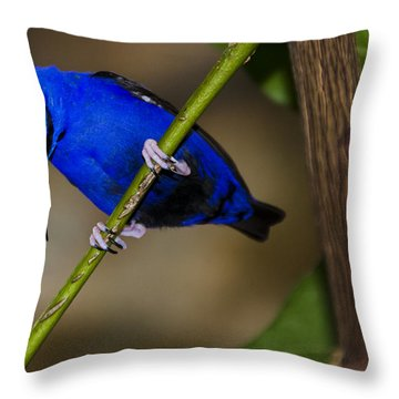 Masked Blue Bird Throw Pillow by Penny Lisowski