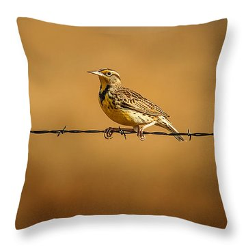 Meadowlark And Barbed Wire Throw Pillow by Robert Frederick