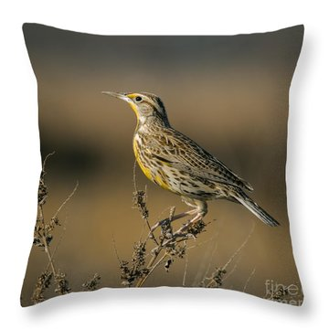 Meadowlark On Weed Throw Pillow by Robert Frederick
