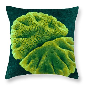 Throw Pillow featuring the photograph Micrasterias Angulosa, Algae, Sem by Science Source