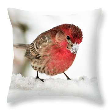 Mining For Food Throw Pillow by Betty LaRue