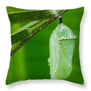 Monarch Butterfly Chrysalis Throw Pillow by Dawna  Moore Photography