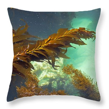 Monterey Bay Seaweed Throw Pillow by Susan Wiedmann