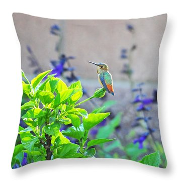 Morning Glory Throw Pillow by Lynn Bauer