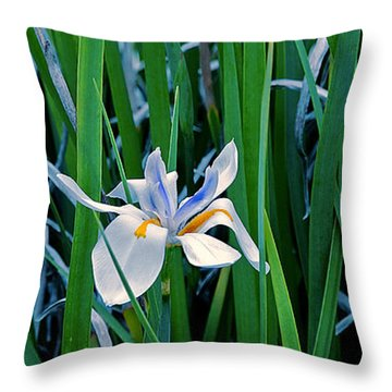 Morning Smile - Wild African Iris Throw Pillow by Donna Proctor