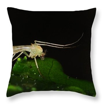 Mosquito Throw Pillow by Paul Ward