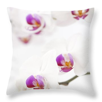 Moth Orchid Throw Pillow by Anne Gilbert