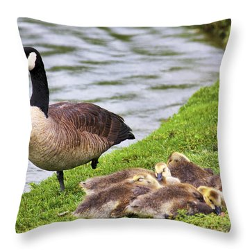 Mother With Goslings Throw Pillow by Jason Politte