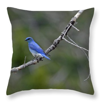 Mountain Bluebird In Yellowstone National Park Throw Pillow by Bruce Gourley