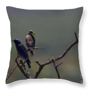 Mountain Bluebird Pair Throw Pillow by Mike  Dawson