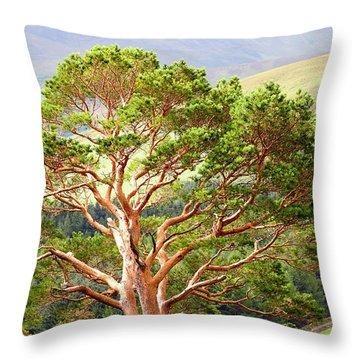 Mountain Pine Tree In Wicklow. Ireland Throw Pillow by Jenny Rainbow