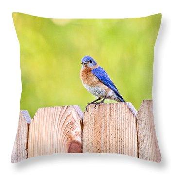 Mr. Bluebird Throw Pillow by Scott Pellegrin