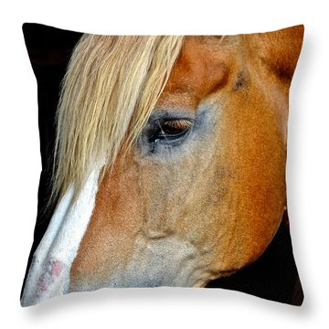 Mr Ed Throw Pillow by Frozen in Time Fine Art Photography