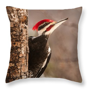 Mr. Pileated Throw Pillow by Lara Ellis