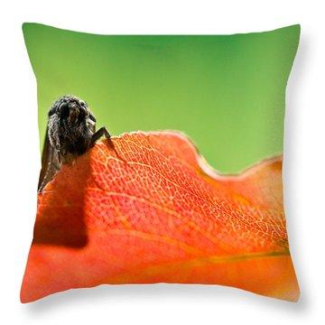 My Leaf Throw Pillow by Shane Holsclaw