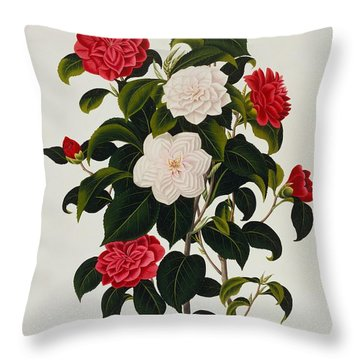 Myrtle Leaved Camellia Throw Pillow by Clara Maria Pope