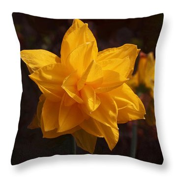 Narcissus Sweet Sue In Full Bloom Throw Pillow by Rona Black