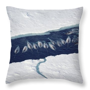 Narwhal Group In Ice Break Throw Pillow by Flip Nicklin
