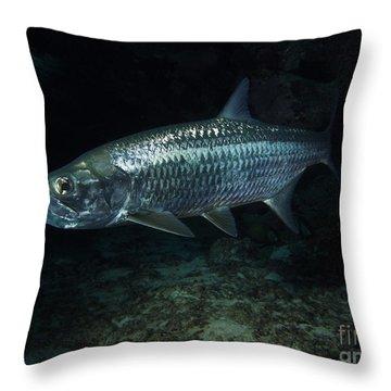 Night Tarpon Throw Pillow by Carey Chen