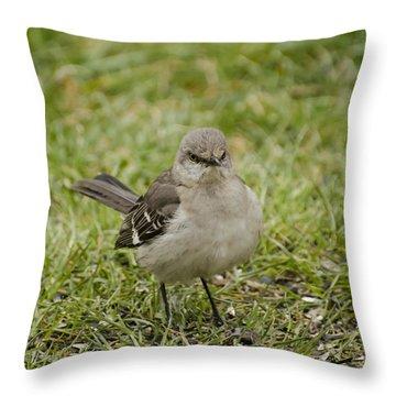 Northern Mockingbird Throw Pillow by Heather Applegate