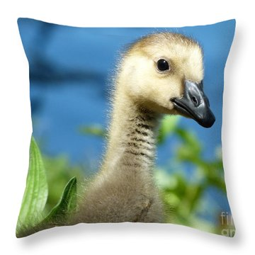 Oh Hi Throw Pillow by Jane Ford