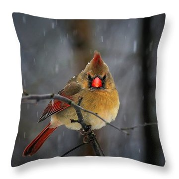 Oh No Not Again Throw Pillow by Lois Bryan