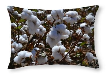 Old Cotton Fields Back Home Throw Pillow by Beverly Guilliams